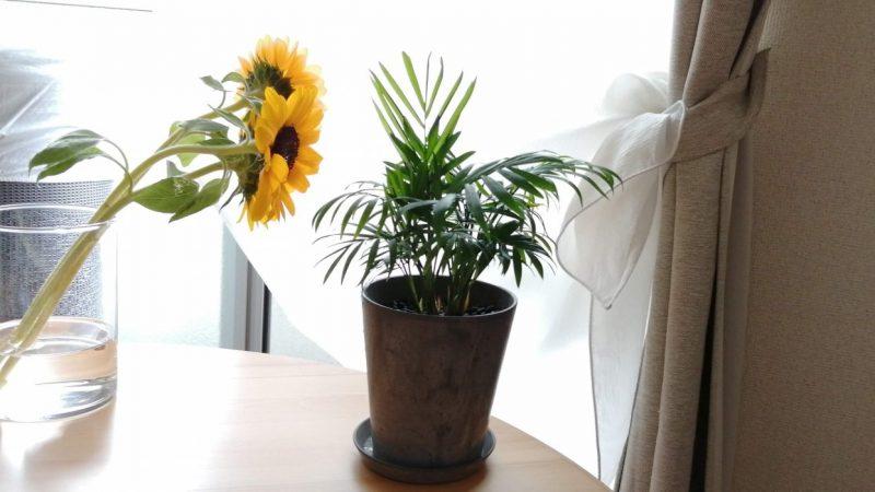 お花は気持ちを明るくしてくれる